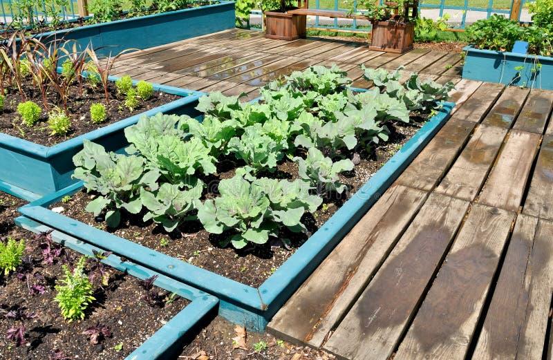 Download Vegetable Garden stock image. Image of gardeners, season - 20150553