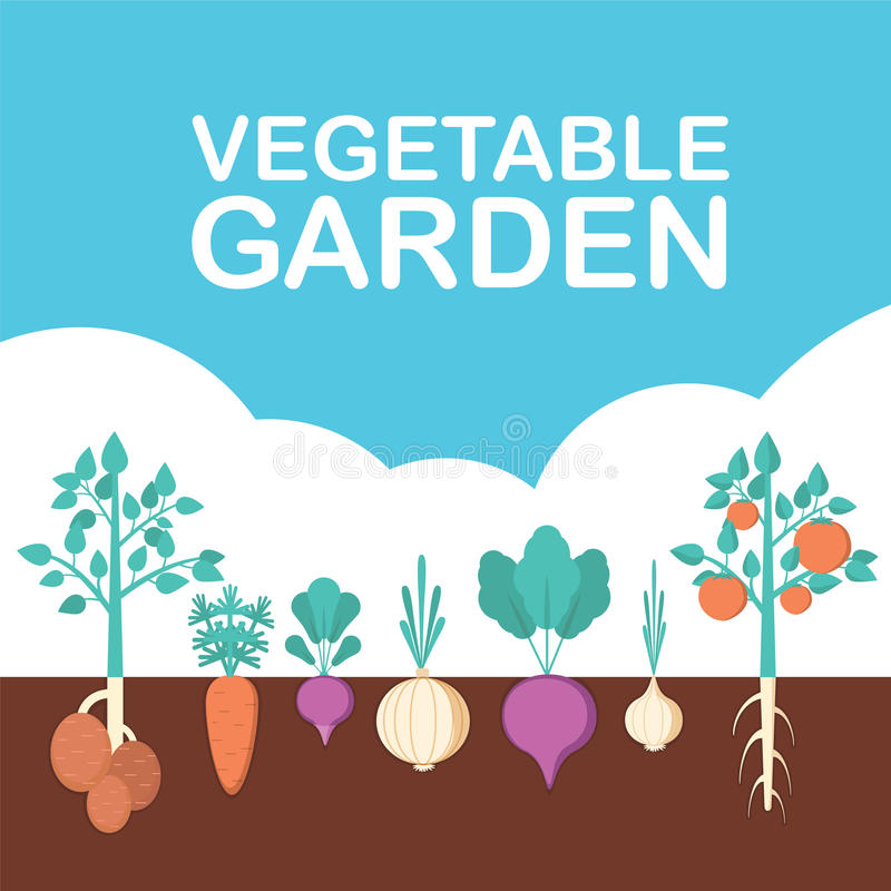Vegetable garden banner. Organic and healthy food. Poster with root veggies. stock illustration