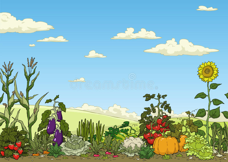 Vegetable garden bed vector illustration