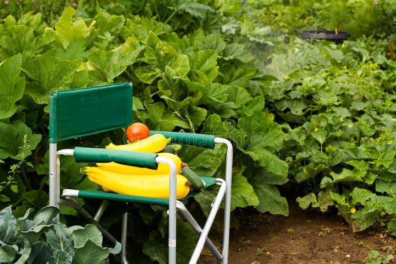 Vegetable garden. Fresh pick of squash from the organic vegetable garden stock images