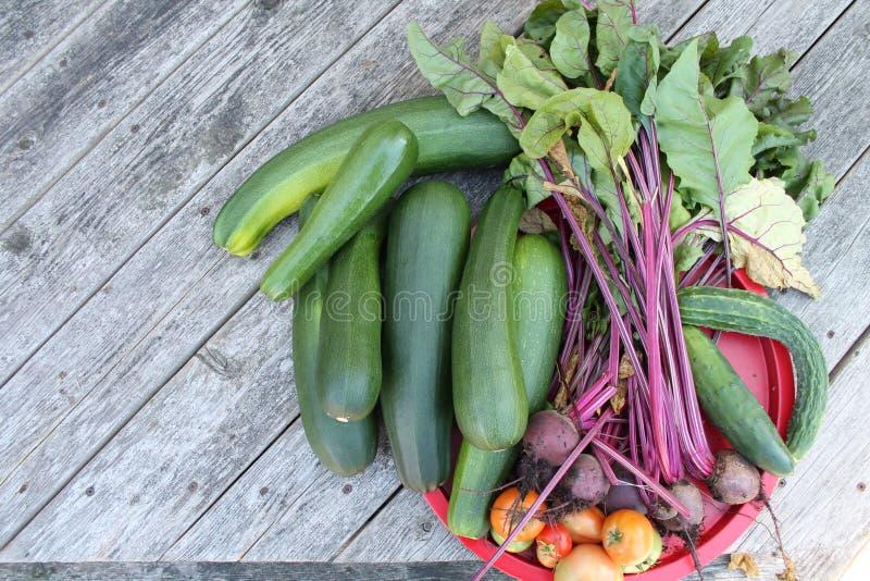 Vegetable garden harvest royalty free stock image