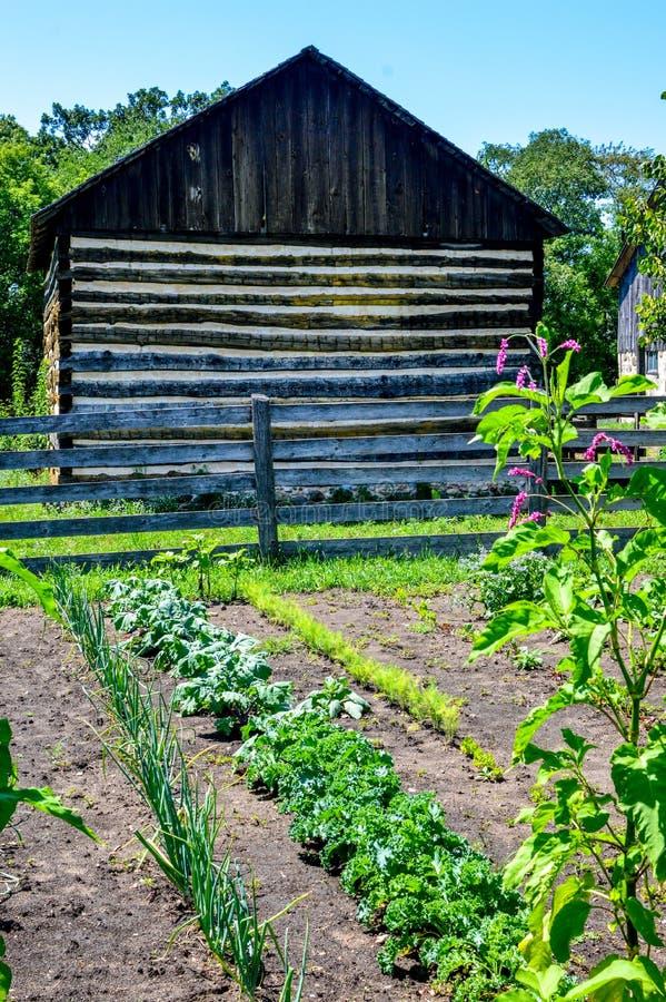 Vegetable Garden With Log Barn stock photo