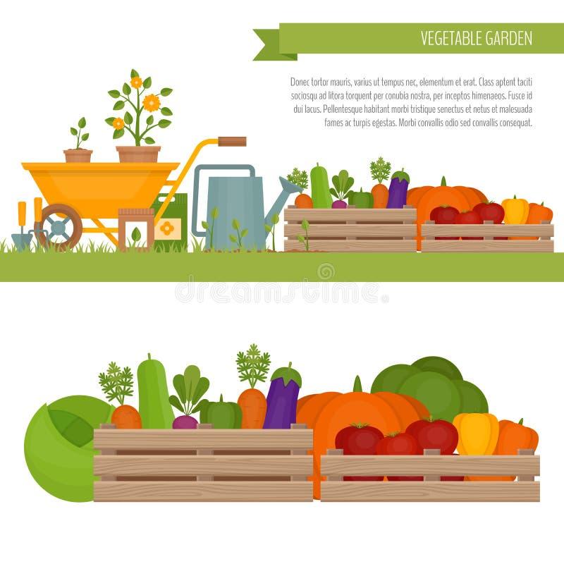 Vegetable garden. Organic and healthy food. Fresh vegetables in vector illustration