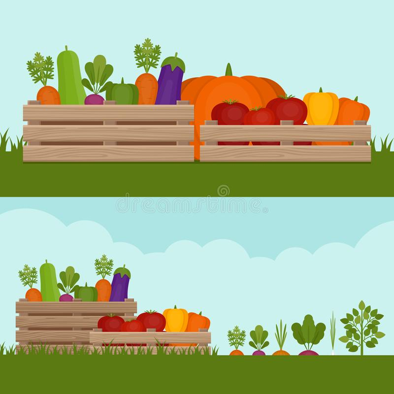 Vegetable garden. Organic and healthy food. Fresh vegetables in vector illustration