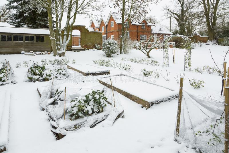 Vegetable garden in winter snow stock photography