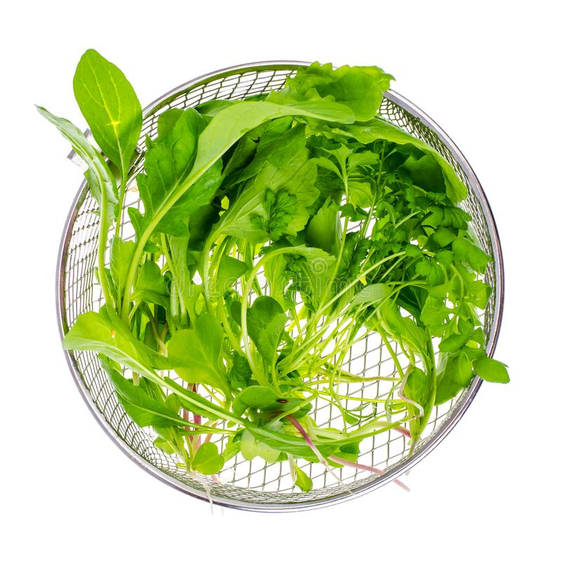 Vegetable green salad leaves, mix stock photography