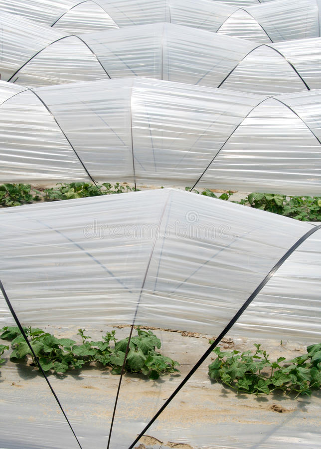 Download Vegetable greenhouse stock photo. Image of agriculture - 14860976