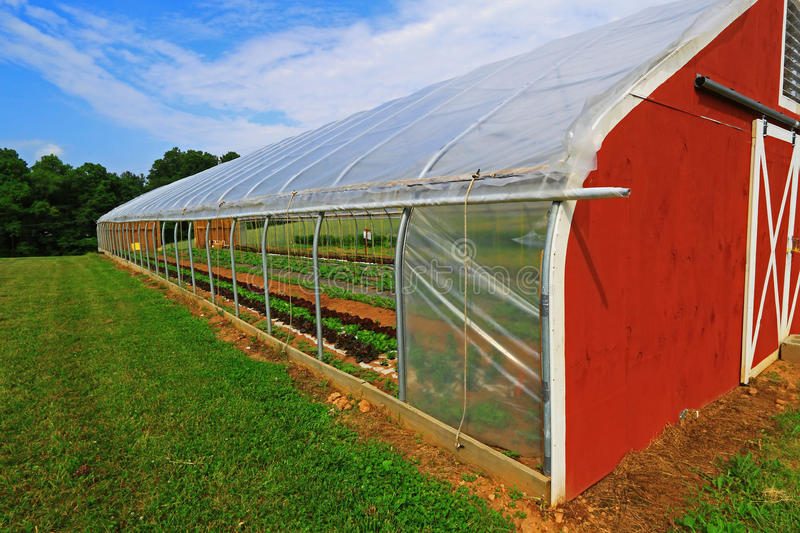 Download Vegetable Greenhouse Stock Photo. Image Of Climate, Growing    54781462