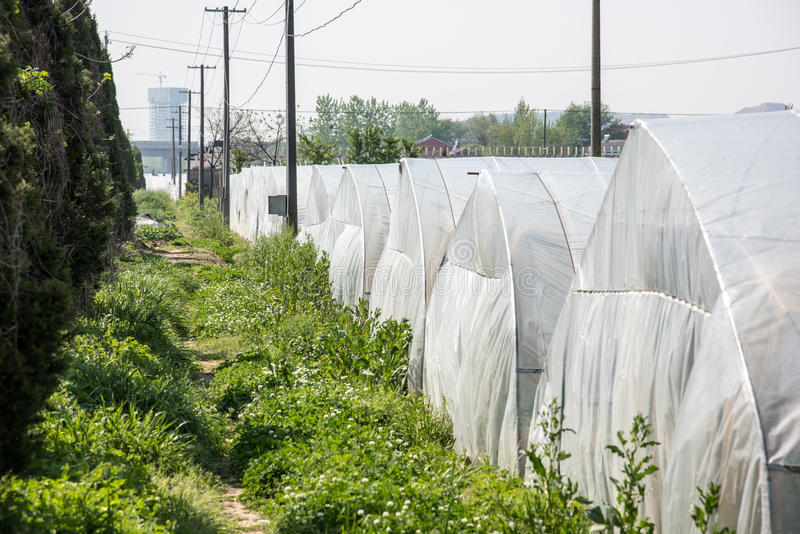 Vegetable greenhouses royalty free stock photography
