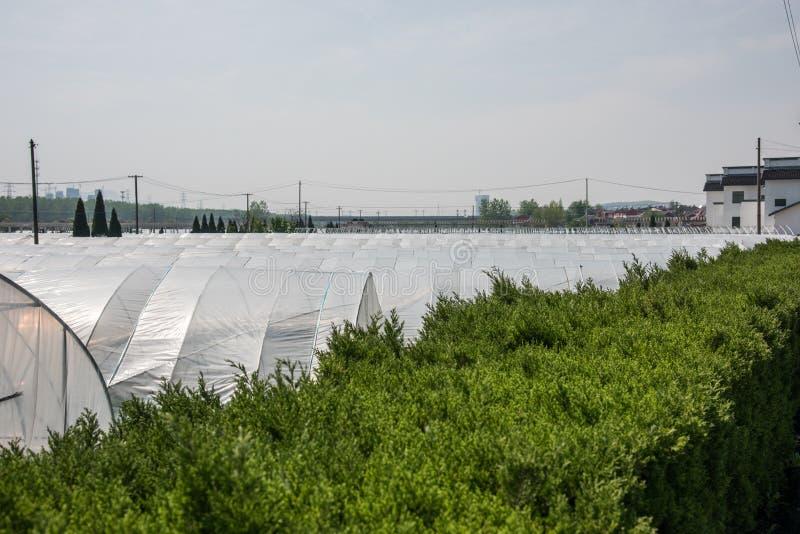 Vegetable greenhouses stock photos