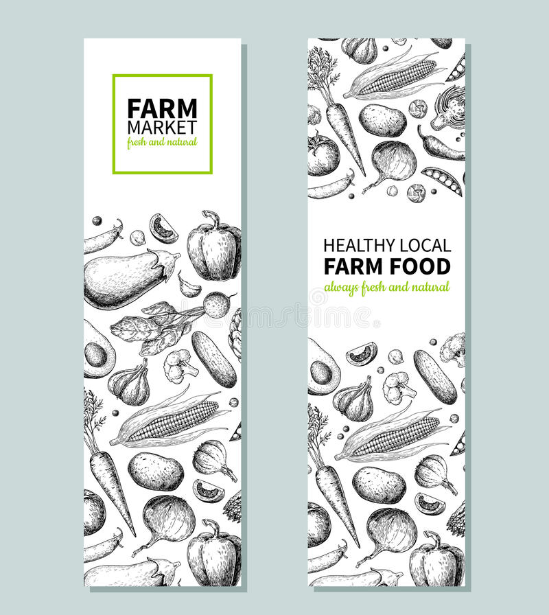 Vegetable hand drawn vintage vector banner. Farm Market poster. Vegetarian sketch of organic products. Detailed food stock illustration