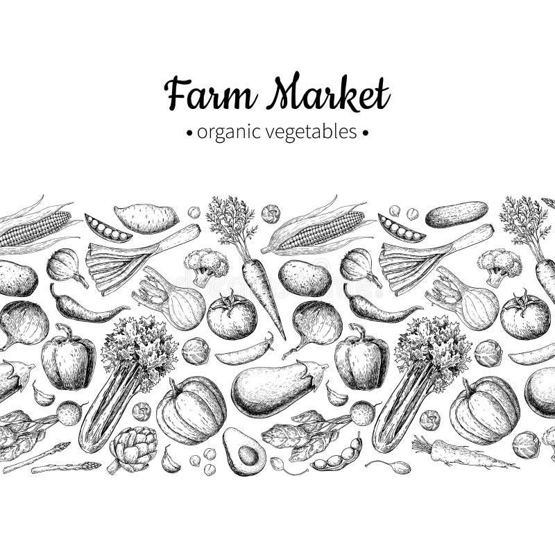 Vegetable hand drawn vintage vector illustration. Farm Market poster. Vegetarian set of organic products. Detailed food drawing. Great for menu, banner, label vector illustration