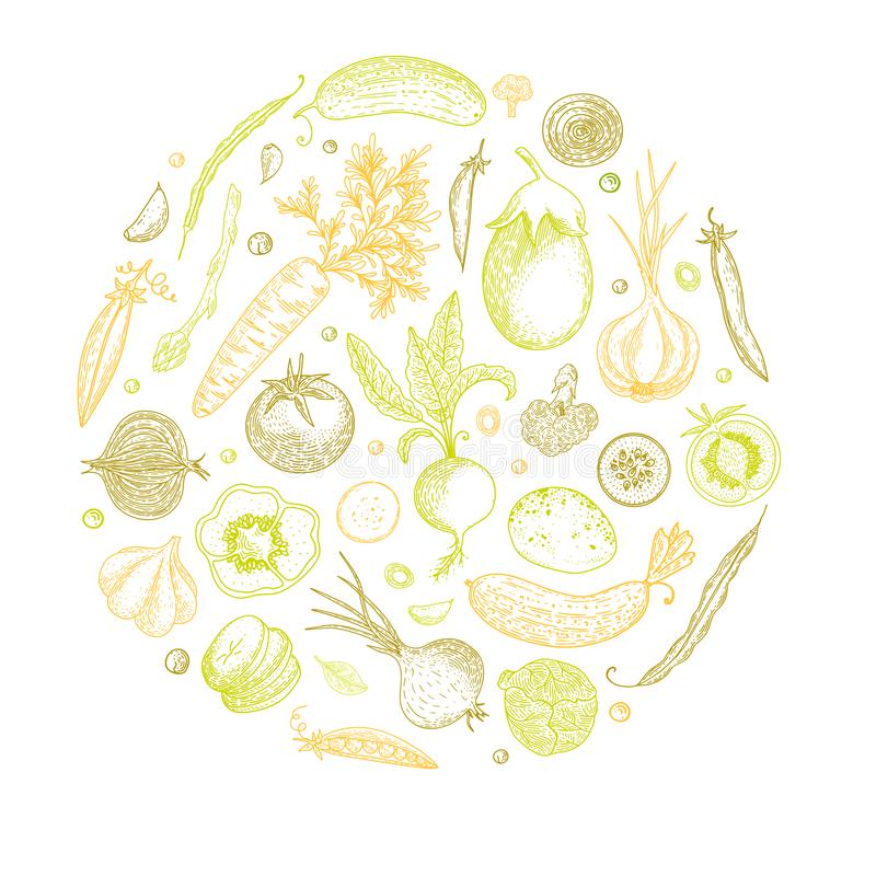 Vegetable hand drawn vintage vector illustration. Vegetarian set of organic products. Can be used for wrapping paper vector illustration