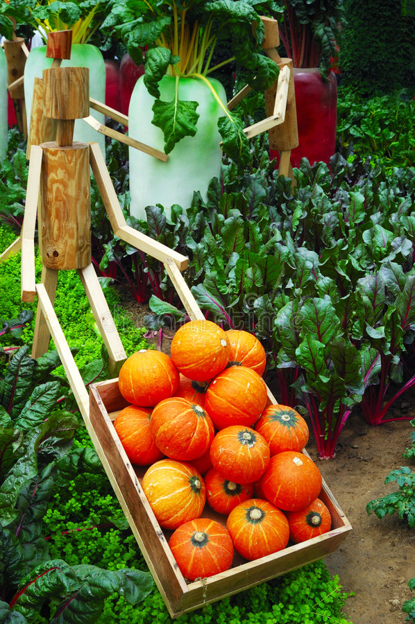 Free Vegetable In Garden Royalty Free Stock Photography - 5051777