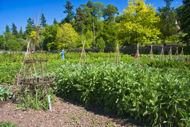 Download Vegetable Kitchen Garden Royalty Free Stock Image - Image: 11385116