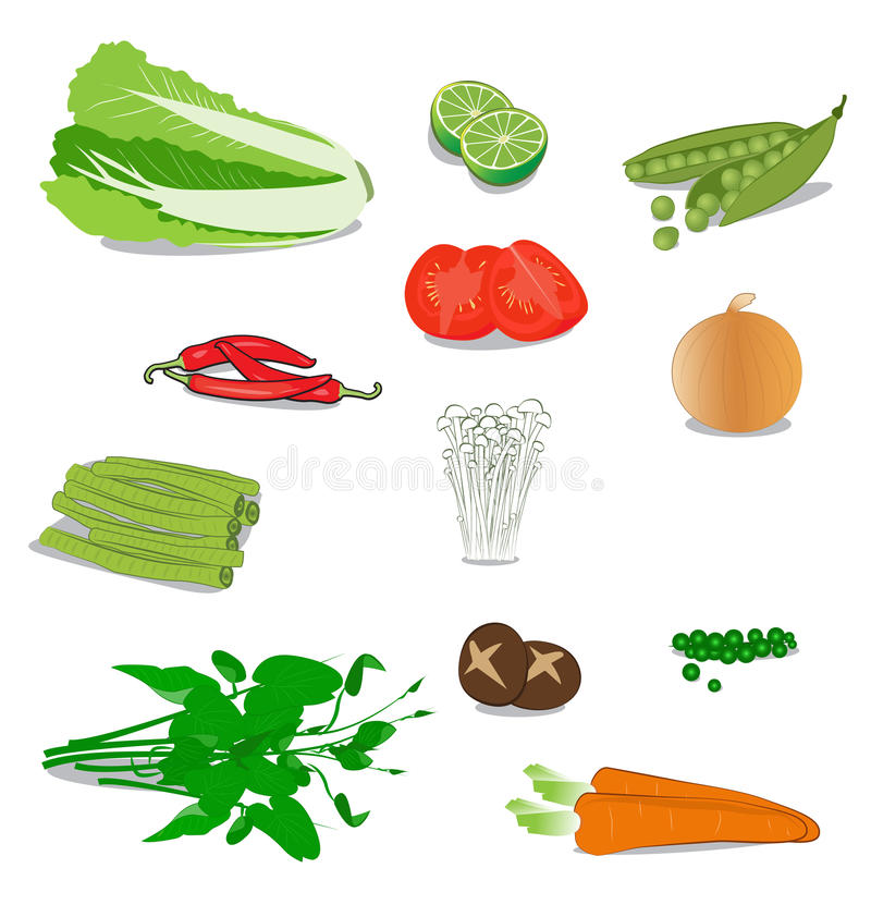 Vegetable. Many vegetable on white background royalty free illustration