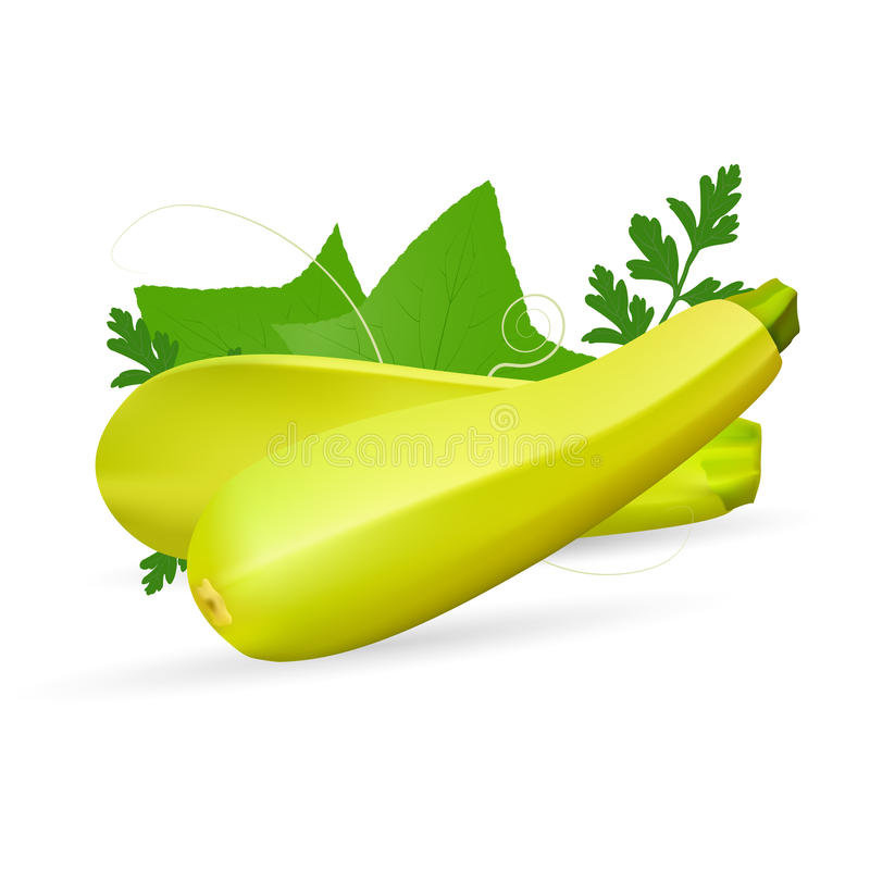Vegetable Marrow Courgette Or Zucchini Isolated On A White Background. royalty free illustration