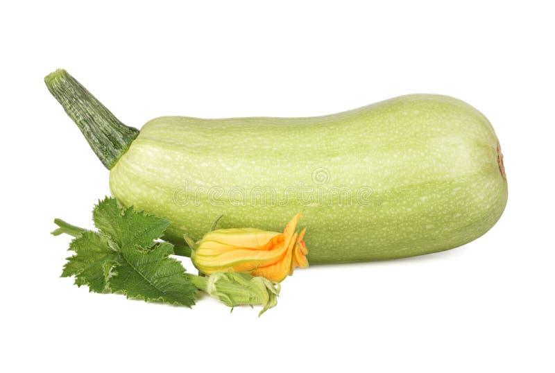 Vegetable marrow stock photography