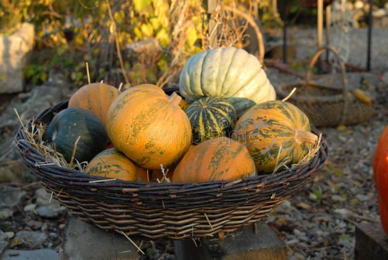 Vegetable marrow in wicker basket royalty free stock photos