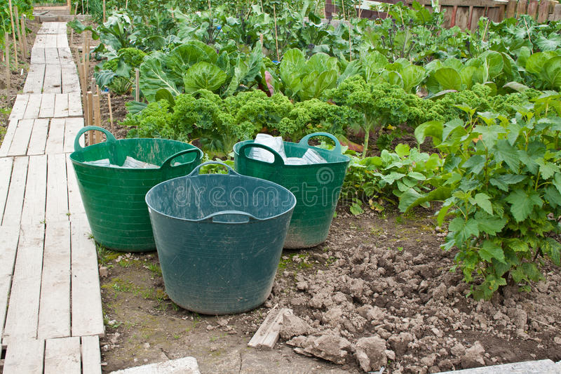 Download Vegetable patch stock photo. Image of urban, buckets - 25861862