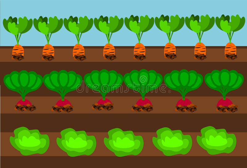 Vegetable path. Vegetables growing on path under blue sky royalty free illustration