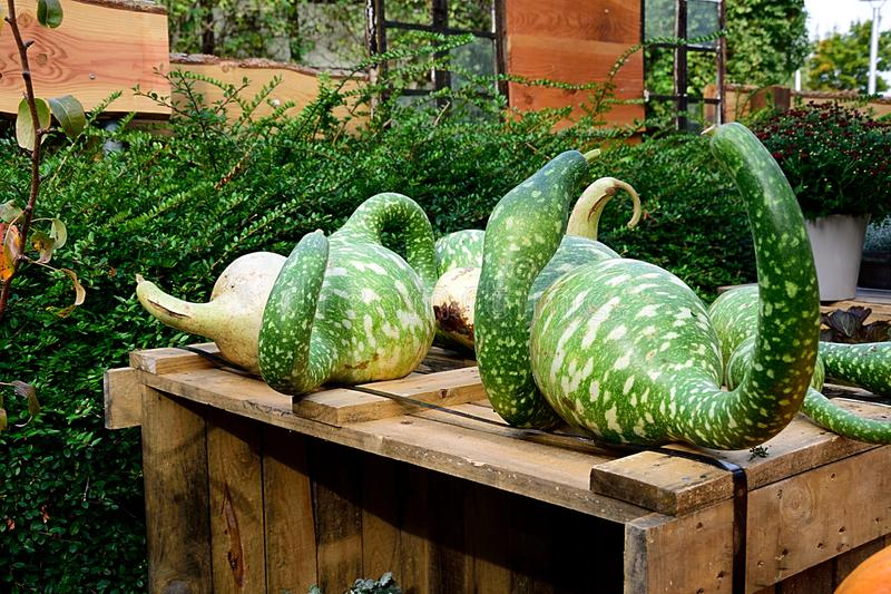 Vegetable, Plant, Produce, Cucumber Gourd And Melon Family Free Public Domain Cc0 Image