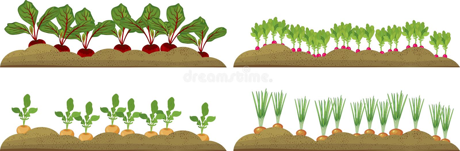 Vegetable plots with different root vegetables. Set of vegetable plots with different root vegetables royalty free illustration