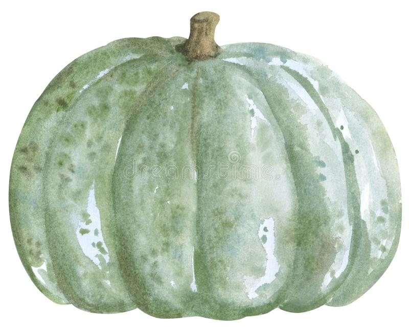 Vegetable, pumpkin squash, hand drawn watercolor illustration isolated on white. Halloween symbol vector illustration