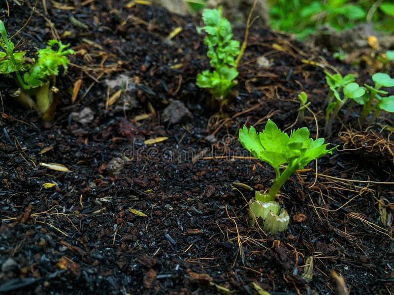 Vegetable seed stock photography