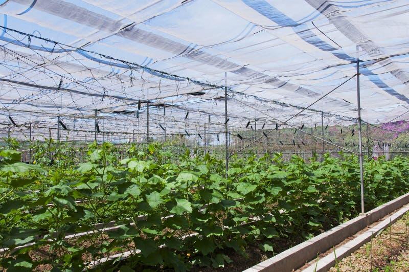 Download Vegetable shed stock image. Image of fertile, develop - 24893203