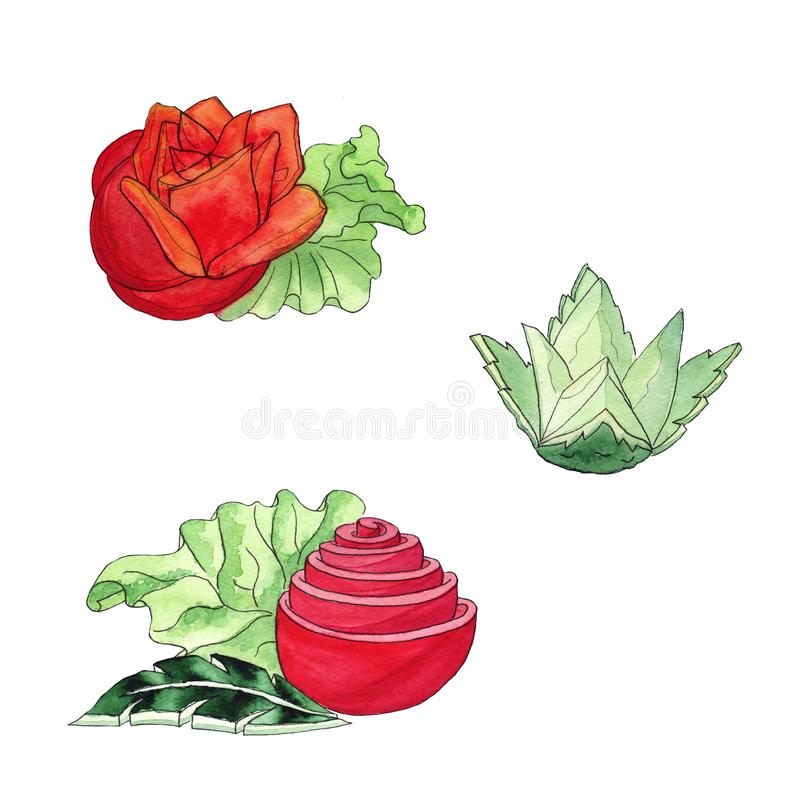 Vegetable slicing Tomatoes Cucumber Rice - Watercolor sketch. Carving and figured cutting stock illustration