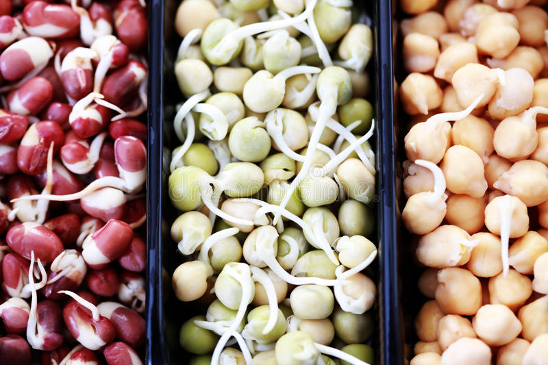 Vegetable sprouts. Box of different vegetable beans sprouts - food and drink stock images
