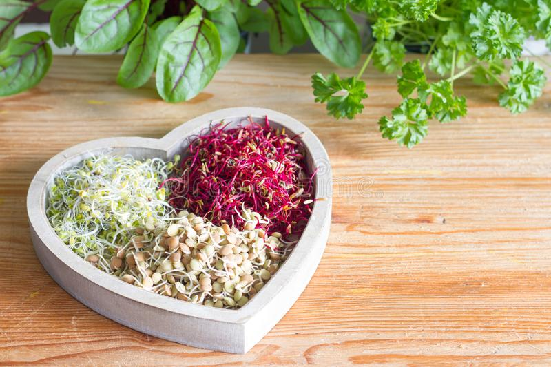 Vegetable sprouts and herbs in the heart healthy life style and alternative medicine concept. On wooden background stock photography