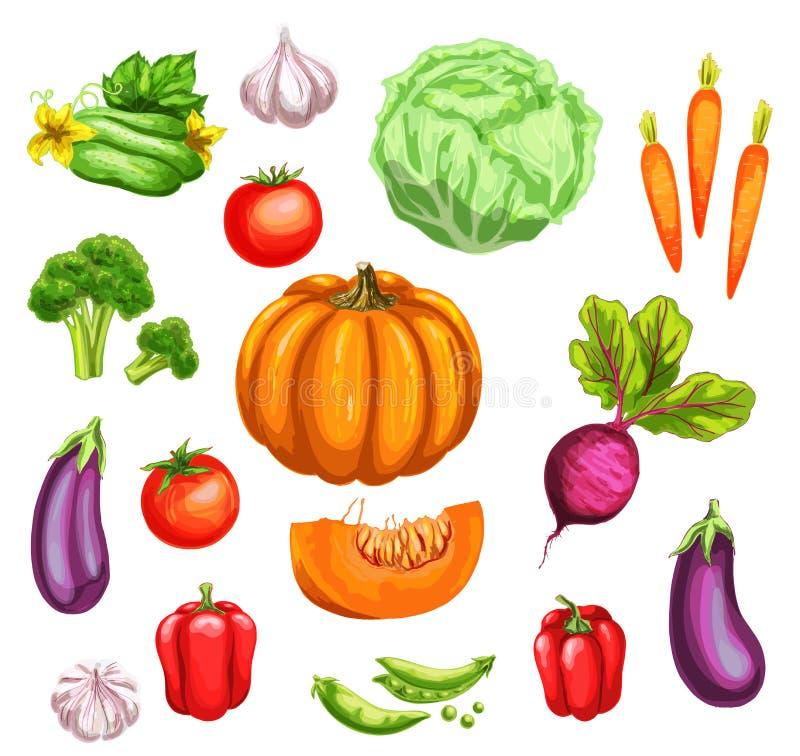 Vegetable watercolor set of fresh organic veggies royalty free illustration