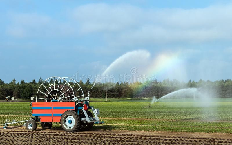 Agricultural crop irrigation in times of drought.Vegetable Watering royalty free stock images
