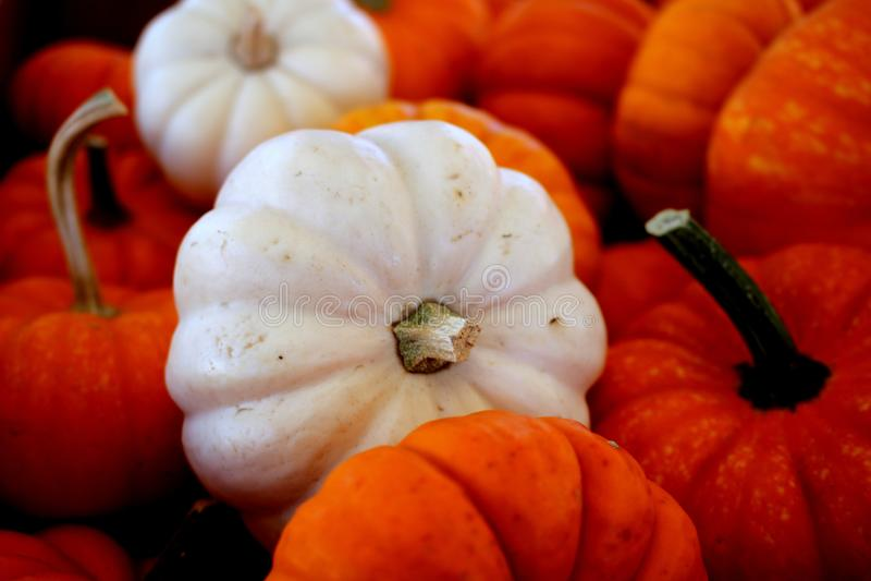 Vegetable, Winter Squash, Cucurbita, Local Food royalty free stock photos