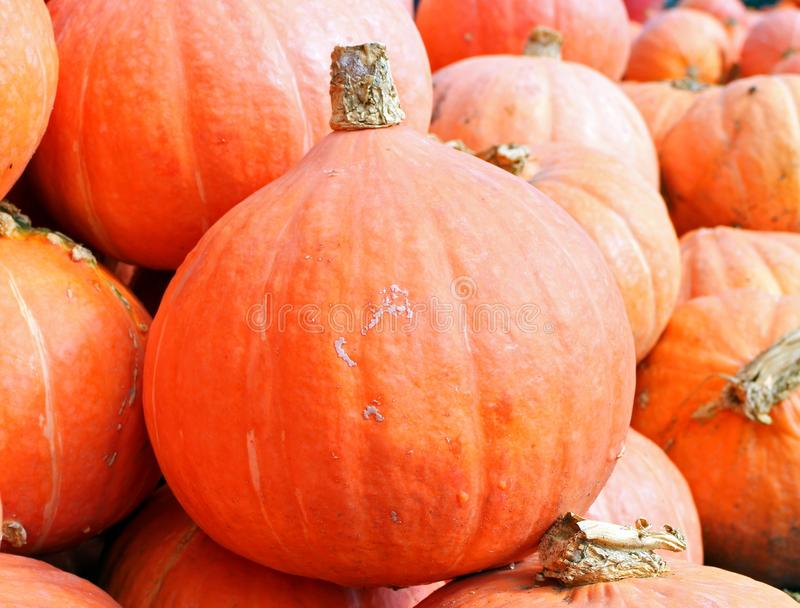 Vegetable, Winter Squash, Natural Foods, Local Food royalty free stock photos