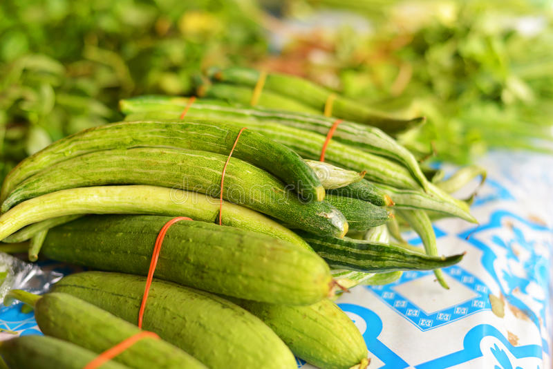 Vegetable zucchini royalty free stock photos