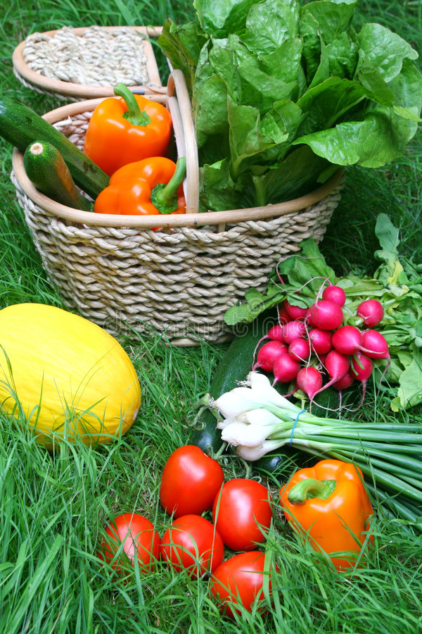 Download Vegetables stock image. Image of harvest, tomato, shopping - 1042567