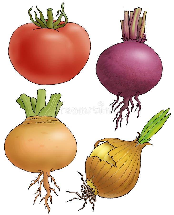 Vegetables. Four vegetables on a white background stock illustration