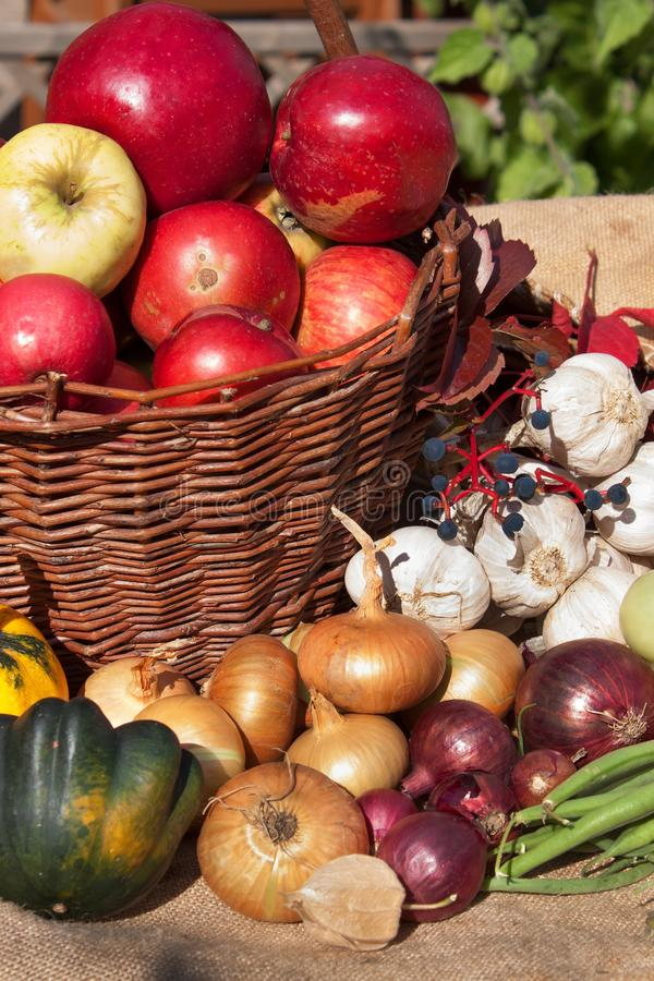 Vegetables and apples in a basket. Autumn day in the home garden. Healthy food for diet. Sunny day. Vegetables and apples in a basket. Autumn day in the home royalty free stock images