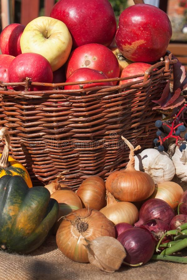 Vegetables and apples in a basket. Autumn day in the home garden. Healthy food for diet. Sunny day. Vegetables and apples in a basket. Autumn day in the home stock images