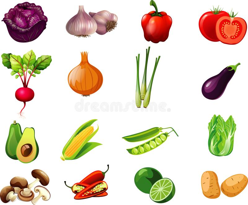 Vegetables cartoon collection one for kids. Vegetables cartoon collection for kids to knowledge vector illustration