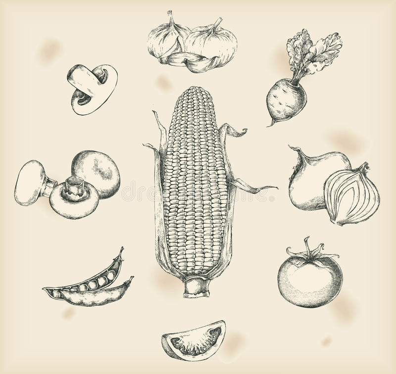 Vegetables drawing- isolated objects vector illustration