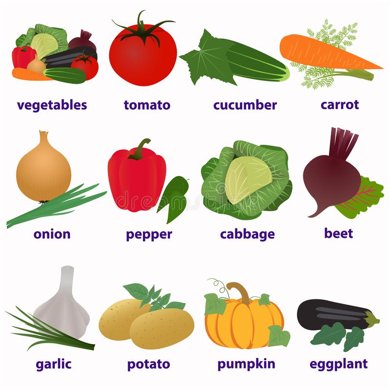 Vegetables. English-language cards vector illustration