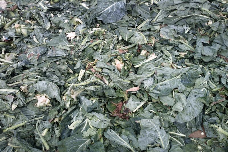 Cabbage leaves. Vegetables and fruits in Indian Bazaar. cabbage leaves, cabbage (Brassica); kale; - camera in leaves of vegetable royalty free stock images