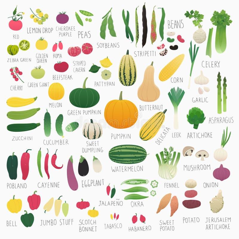 Food Vol.2: Vegetables royalty free illustration