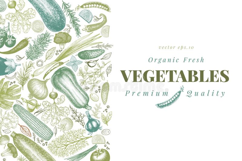 Vegetables hand drawn vector illustration. Retro engraved style banner. Can be use for menu, label, packaging, farm. Vegetables hand drawn vector illustration royalty free illustration