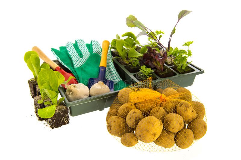 Download Vegetables And Herbs For Vegetable Garden Stock Photo - Image: 34258576