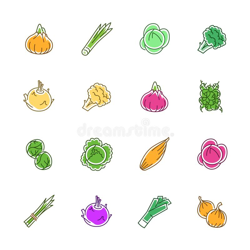 Vegetables icons - Onion, cabbage and cauliflower stock images